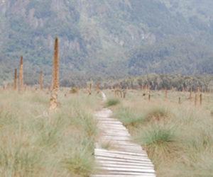 Kilembe Trail Rwenzori