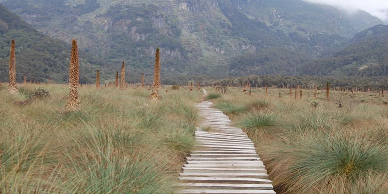 Mt. Rwenzori Uganda