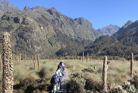 5 Days Rwenzori Mountaineering Tour